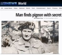 9 News, Australia / war pigeon story