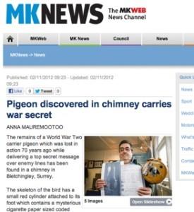 MK news / pigeon story
