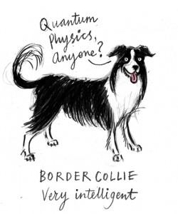 Alice Tait's intelligent Border Collie